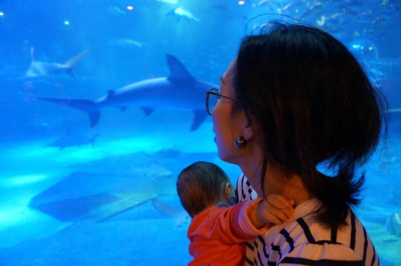 【石川県七尾市】赤ちゃん連れでも楽しめる観光スポットを2つご紹介!